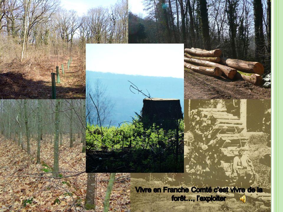 Vivre en Franche Comté c'est vivre de la forêt…, l'exploiter