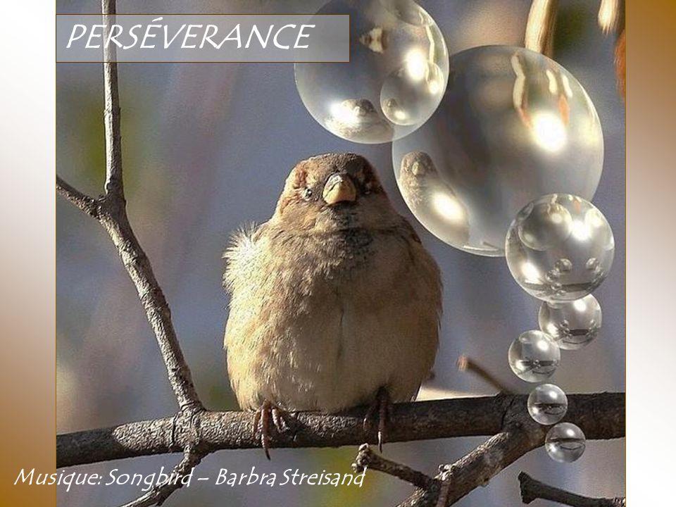 PERSÉVERANCE Musique: Songbird – Barbra Streisand