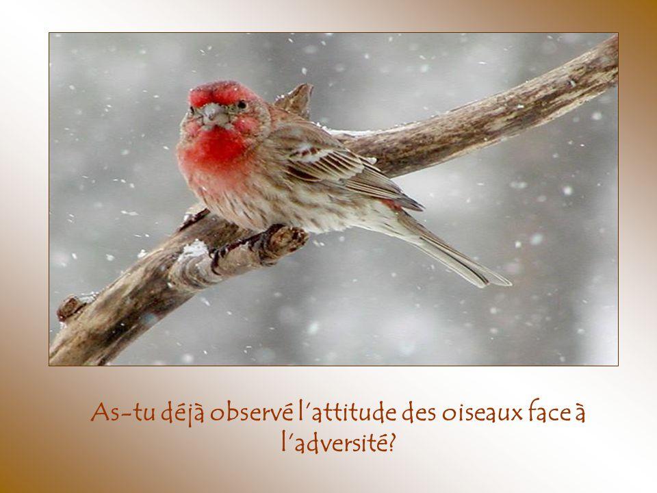 As-tu déjà observé l'attitude des oiseaux face à l'adversité