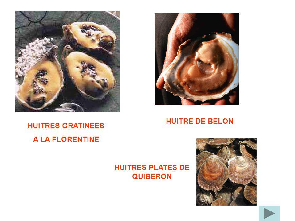 HUITRES PLATES DE QUIBERON
