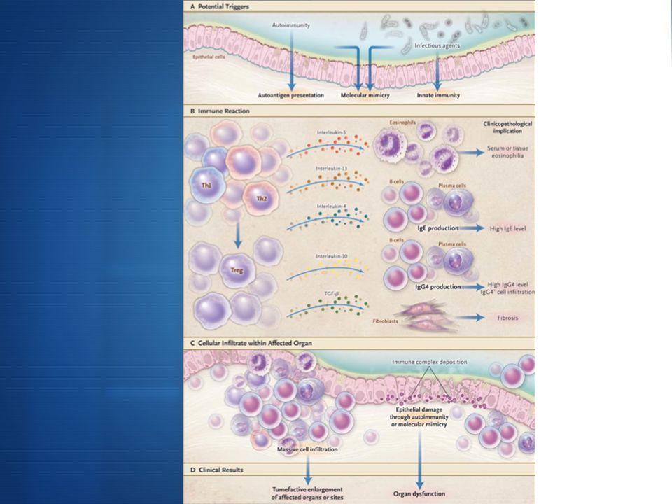 Le mécanisme initiateur serait une infection qui par mimétisme moléculaire serait à l'origine d'une réactivité pathologique à des autoantigènes. Cette rupture de la tolérance du soi impliquerait réponse immunitaire de type Th1 avec productions de cytokines proinflammatoires et une diminution des LT régulateurs naîfs.