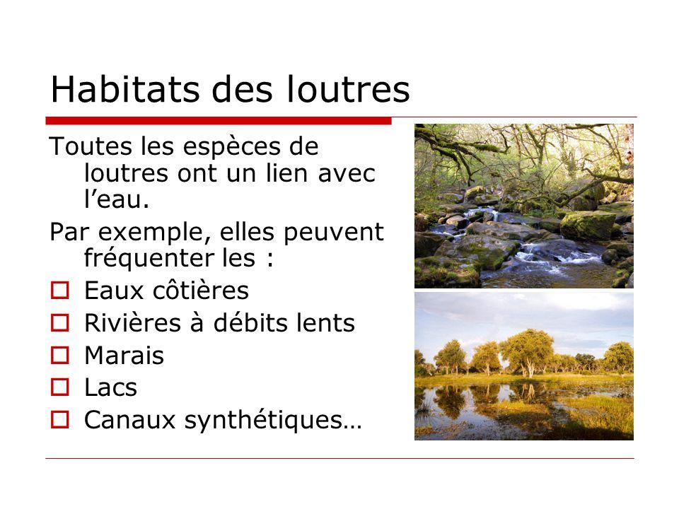 Habitats des loutres Toutes les espèces de loutres ont un lien avec l'eau. Par exemple, elles peuvent fréquenter les :