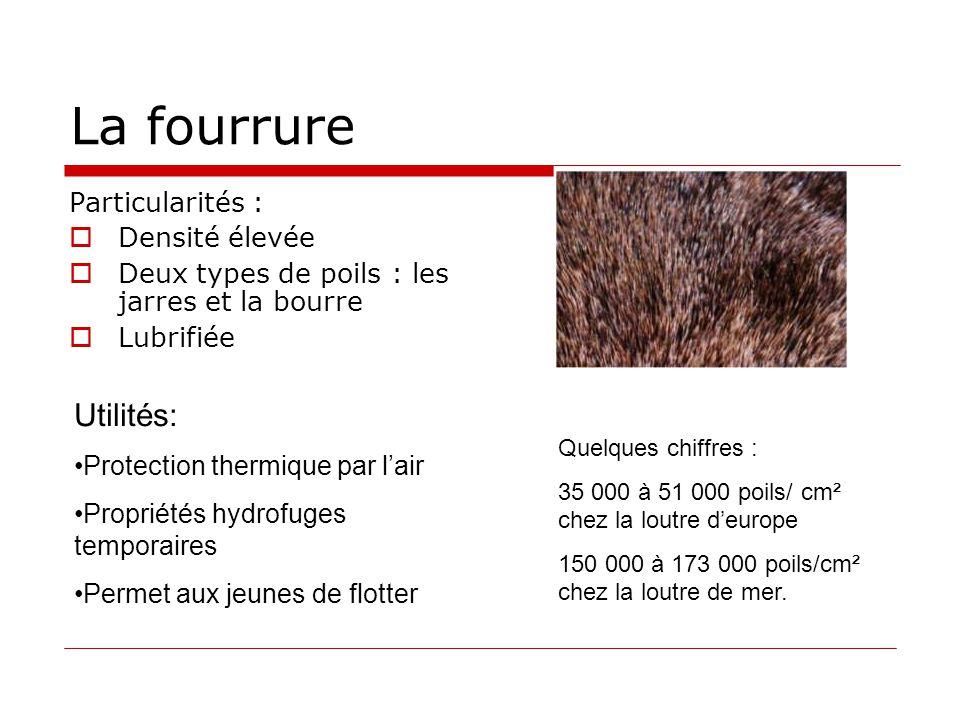 La fourrure Utilités: Particularités : Densité élevée