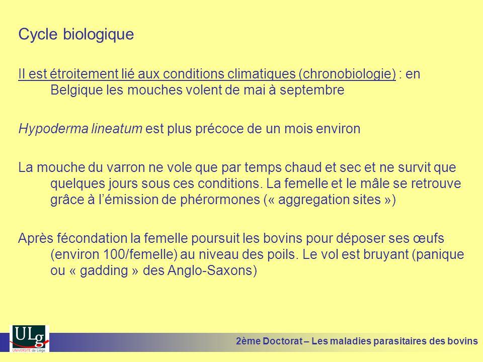 Cycle biologique Il est étroitement lié aux conditions climatiques (chronobiologie) : en Belgique les mouches volent de mai à septembre.