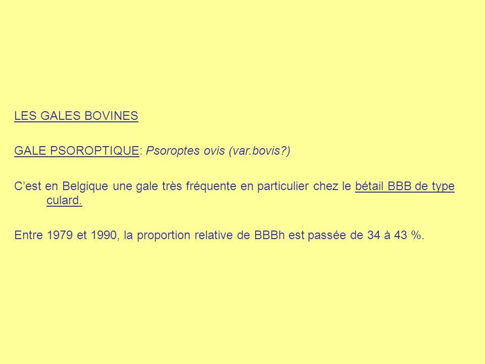 LES GALES BOVINES GALE PSOROPTIQUE: Psoroptes ovis (var.bovis )
