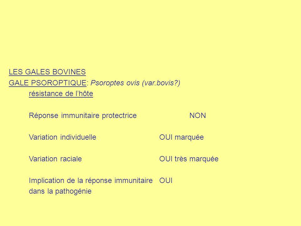 LES GALES BOVINES GALE PSOROPTIQUE: Psoroptes ovis (var.bovis ) résistance de l'hôte. Réponse immunitaire protectrice NON.