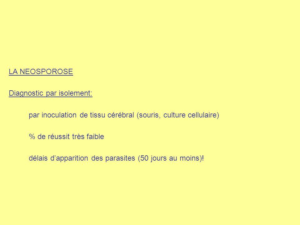 LA NEOSPOROSE Diagnostic par isolement: par inoculation de tissu cérébral (souris, culture cellulaire)