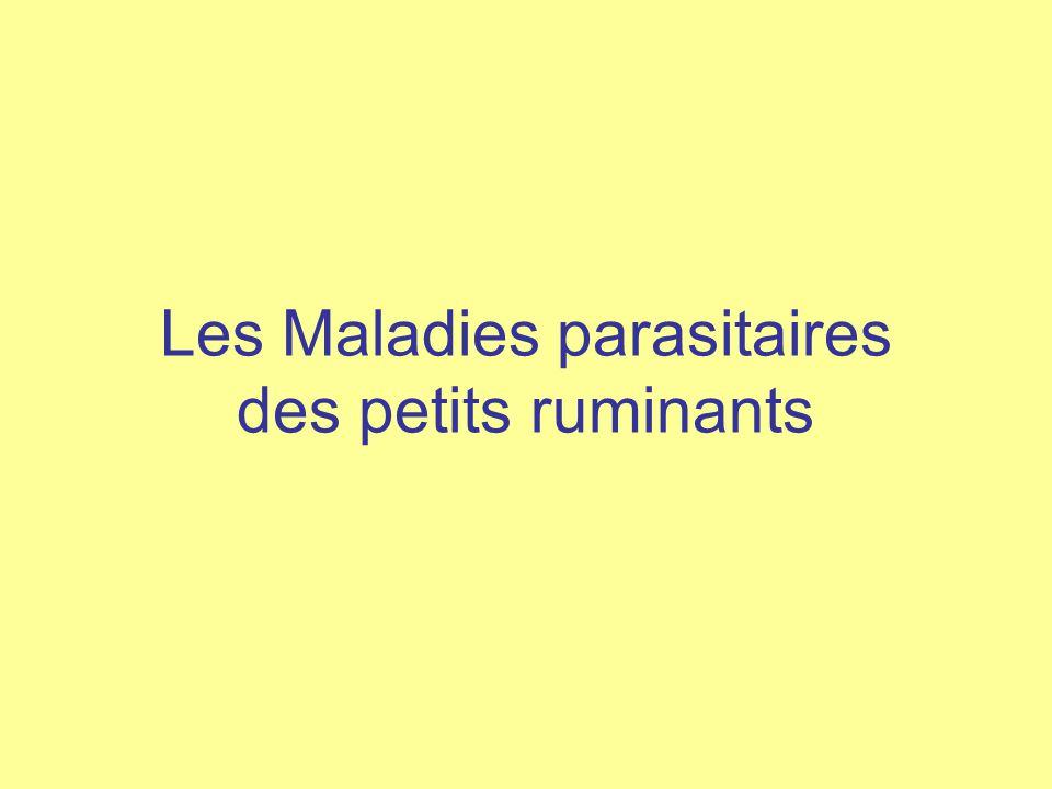 Les Maladies parasitaires