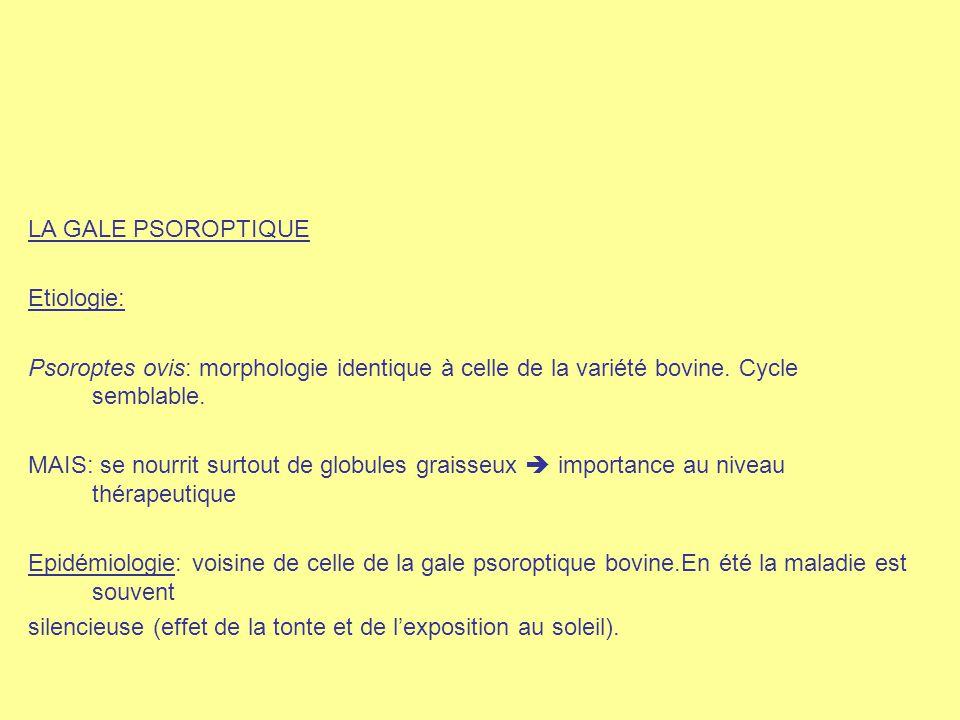 LA GALE PSOROPTIQUE Etiologie: Psoroptes ovis: morphologie identique à celle de la variété bovine. Cycle semblable.