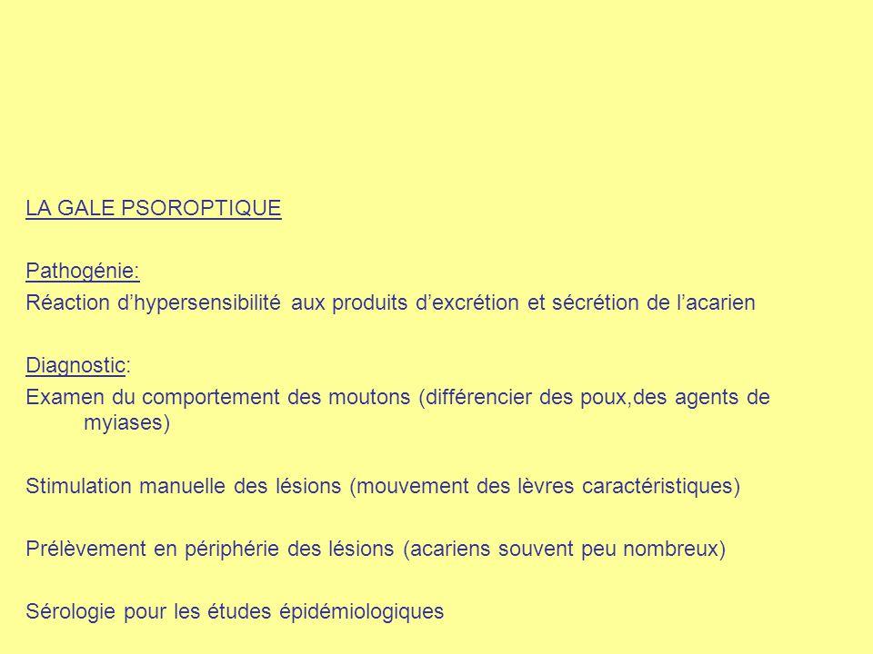 LA GALE PSOROPTIQUE Pathogénie: Réaction d'hypersensibilité aux produits d'excrétion et sécrétion de l'acarien.