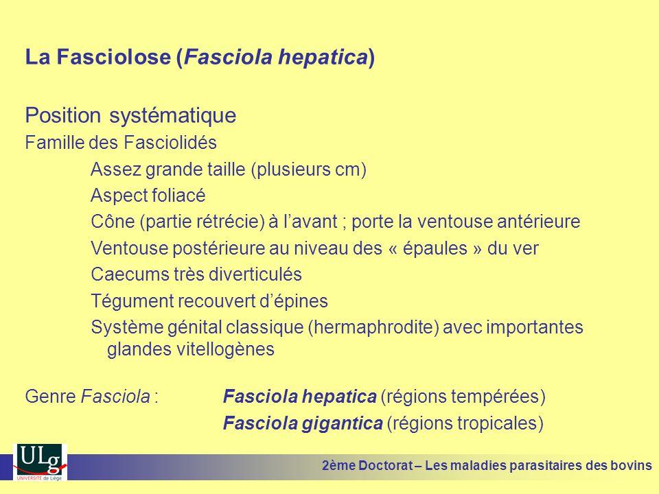 La Fasciolose (Fasciola hepatica) Position systématique