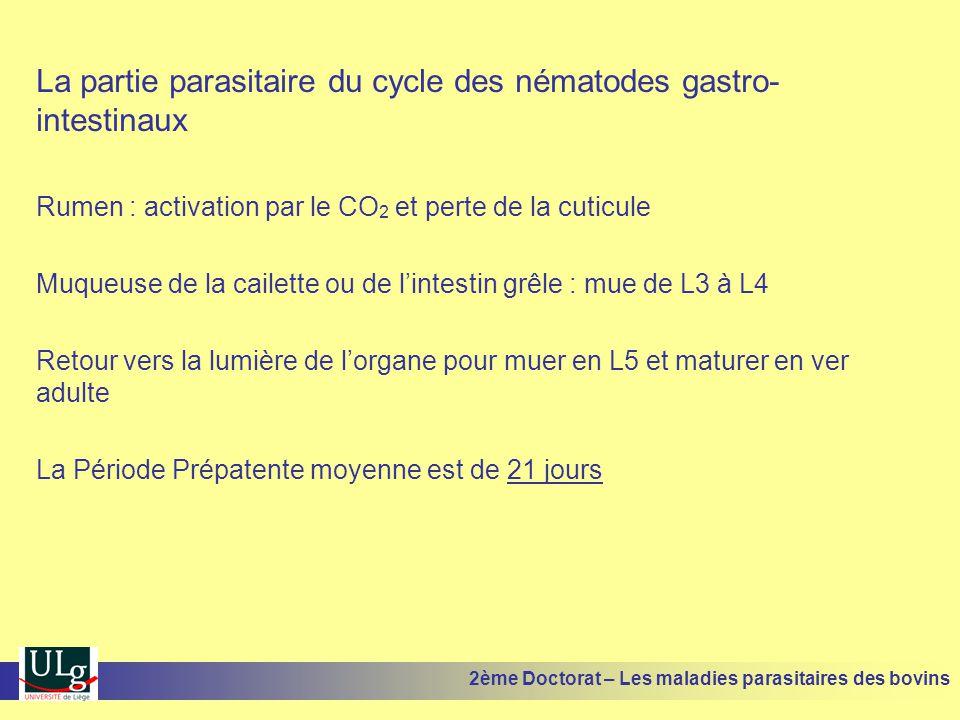La partie parasitaire du cycle des nématodes gastro-intestinaux