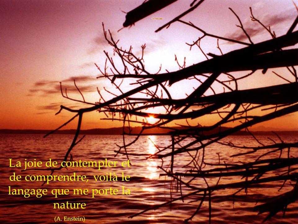 La joie de contempler et de comprendre, voilà le langage que me porte la nature
