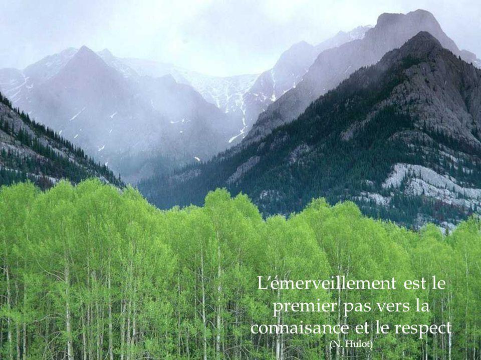 L'émerveillement est le premier pas vers la connaisance et le respect