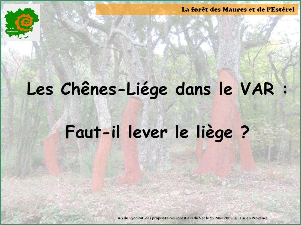 Les Chênes-Liége dans le VAR :