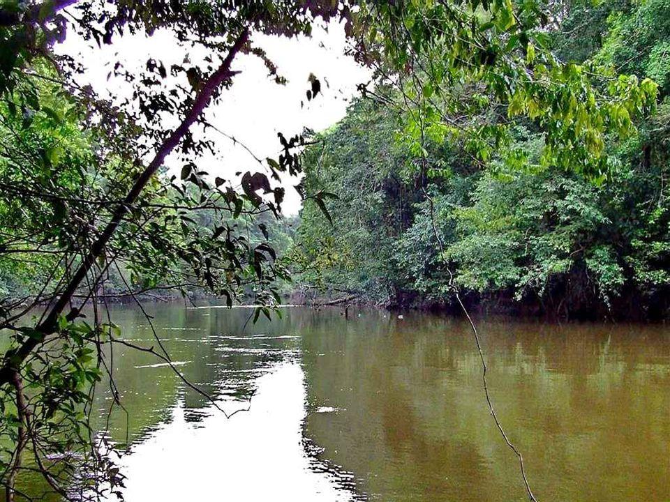 Fleuve Kourou