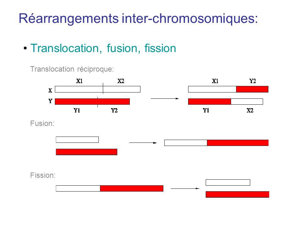 Réarrangements inter-chromosomiques: