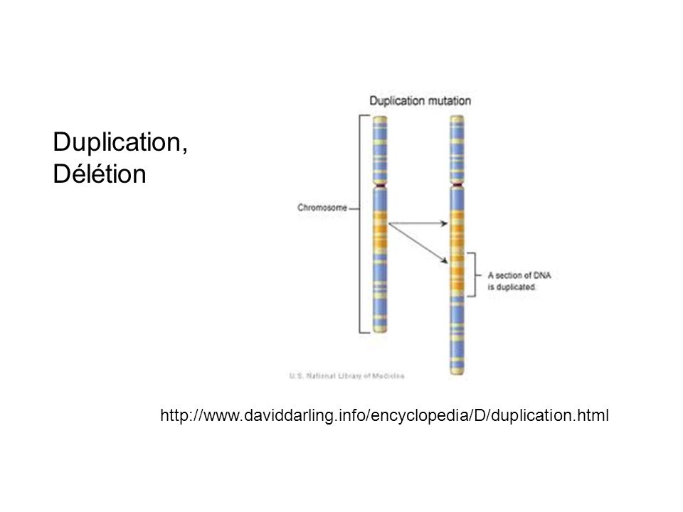 Duplication, Délétion http://www.daviddarling.info/encyclopedia/D/duplication.html