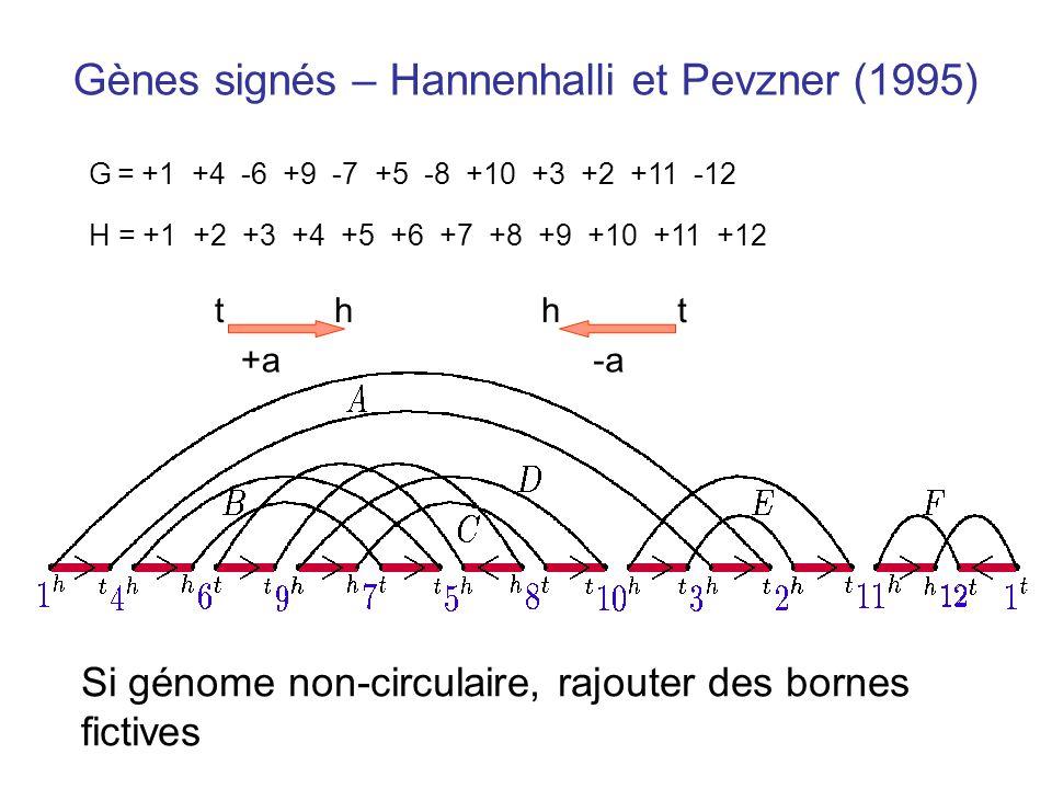 Gènes signés – Hannenhalli et Pevzner (1995)