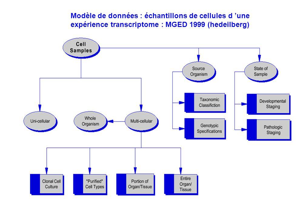 Modèle de données : échantillons de cellules d 'une expérience transcriptome : MGED 1999 (hedeilberg)