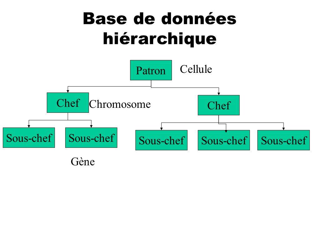 Base de données hiérarchique