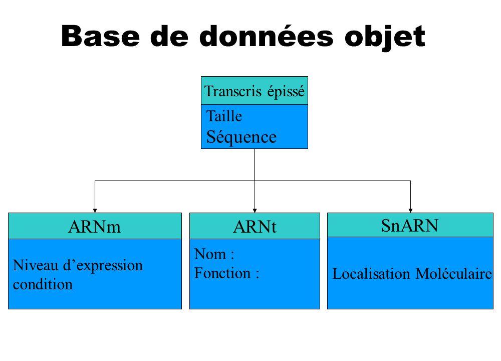 Base de données objet Séquence ARNt ARNm SnARN Personne Chef Patron