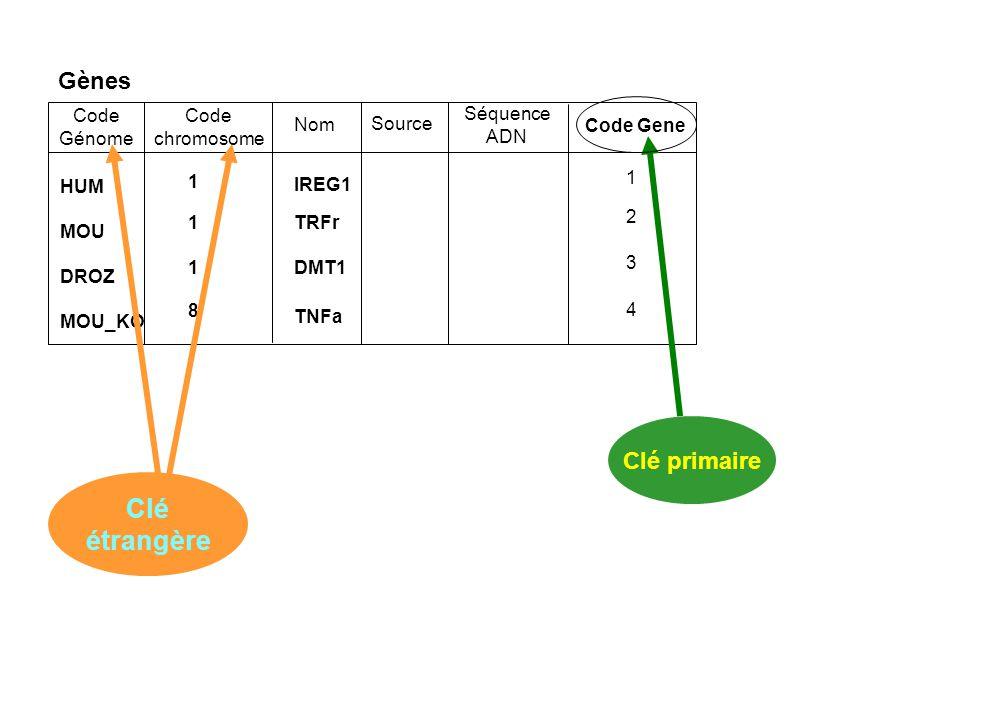 Clé étrangère Gènes Clé primaire Code Génome Code chromosome Séquence