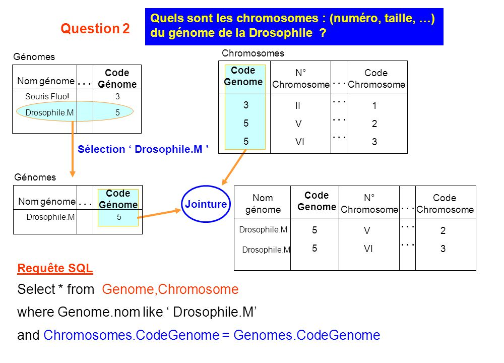 Select * from Genome,Chromosome where Genome.nom like ' Drosophile.M'