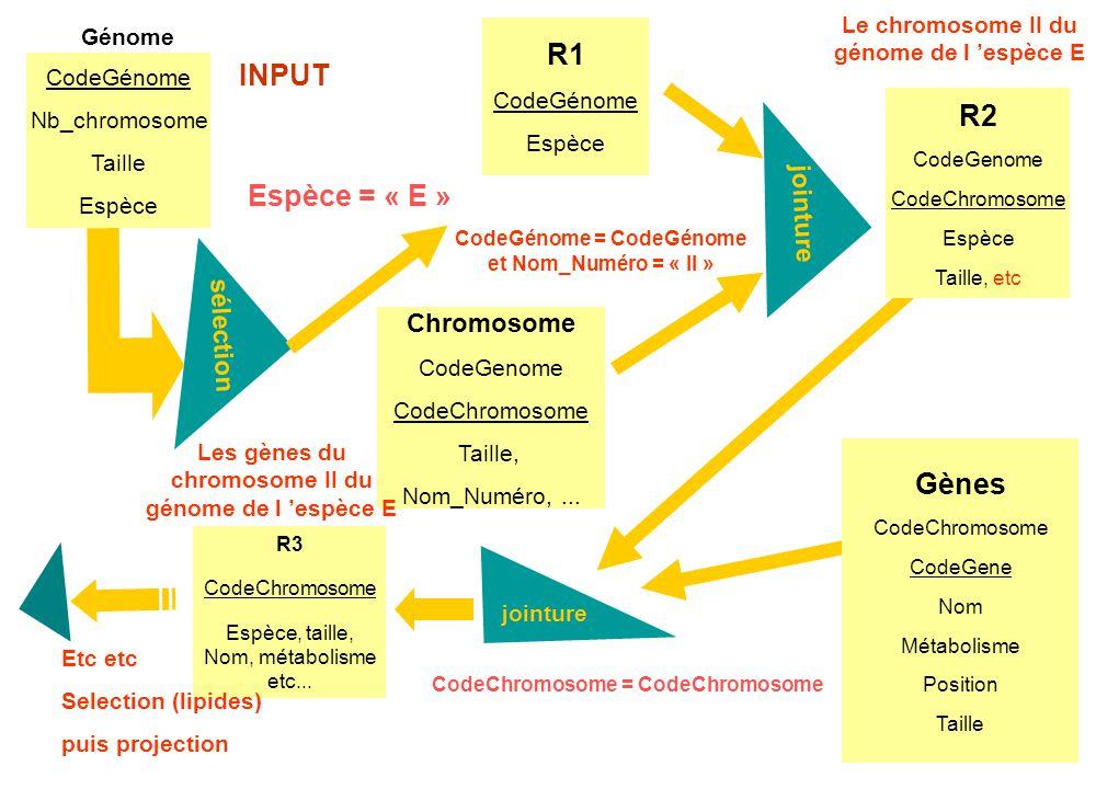 R1 INPUT R2 Espèce = « E » Gènes jointure sélection Chromosome