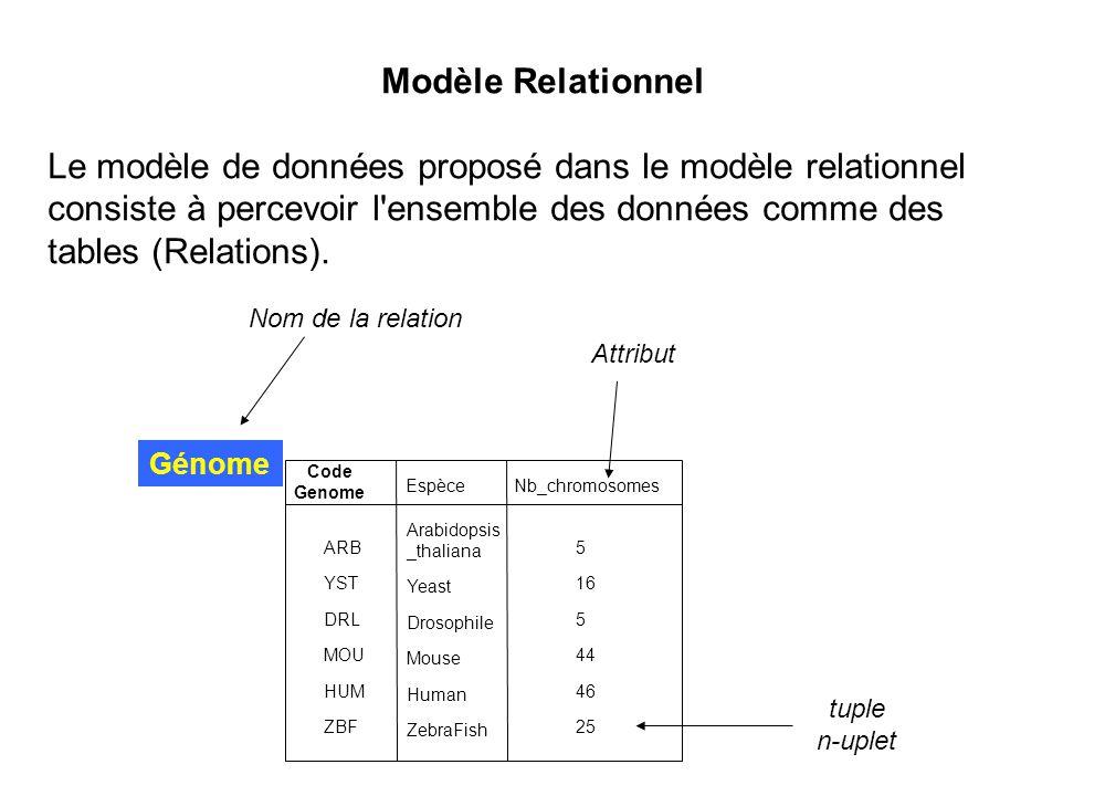 Modèle Relationnel Le modèle de données proposé dans le modèle relationnel consiste à percevoir l ensemble des données comme des tables (Relations).