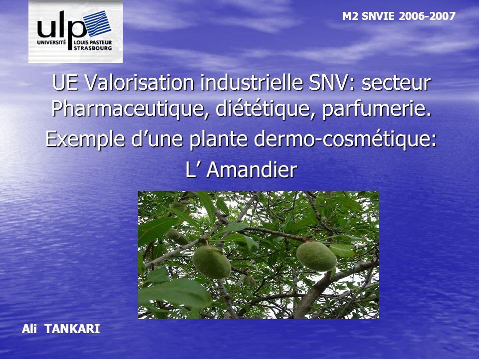 Exemple d'une plante dermo-cosmétique: