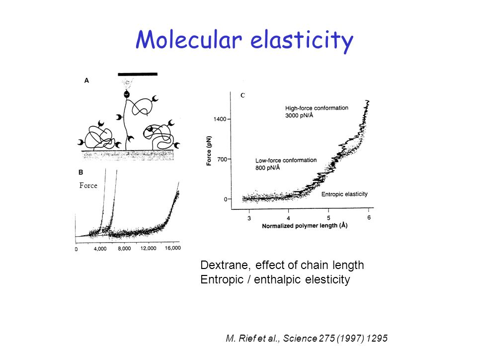 Molecular elasticity Dextrane, effect of chain length
