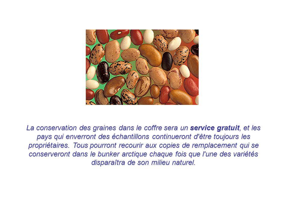 La conservation des graines dans le coffre sera un service gratuit, et les pays qui enverront des échantillons continueront d être toujours les propriétaires.
