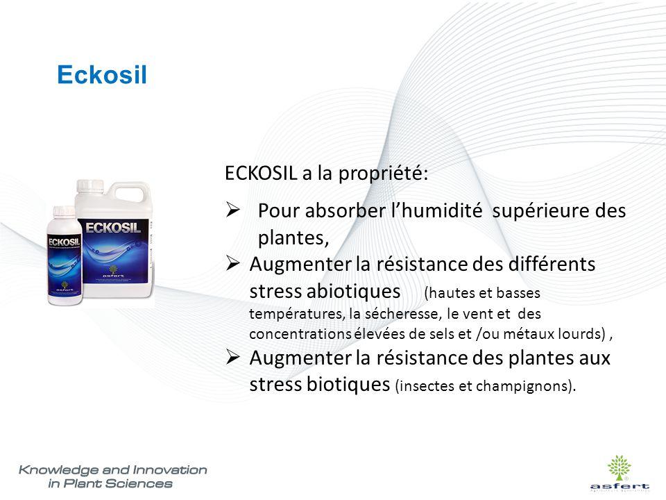 Eckosil ECKOSIL a la propriété: