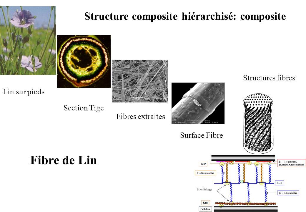 Fibre de Lin Structure composite hiérarchisé: composite