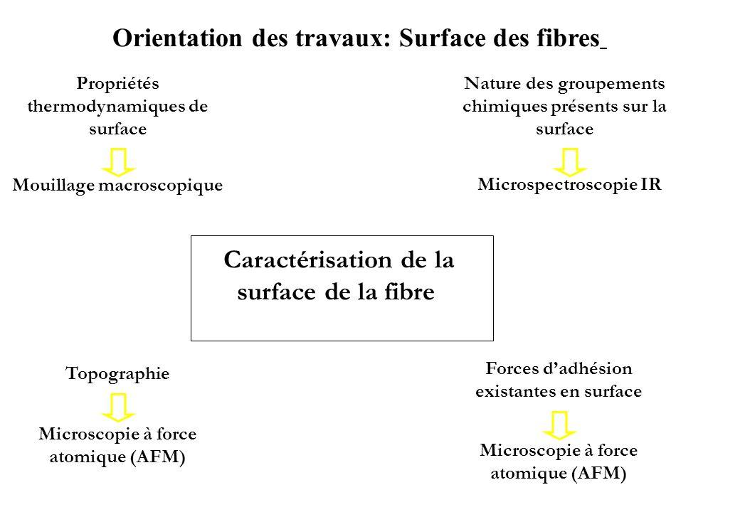 Orientation des travaux: Surface des fibres