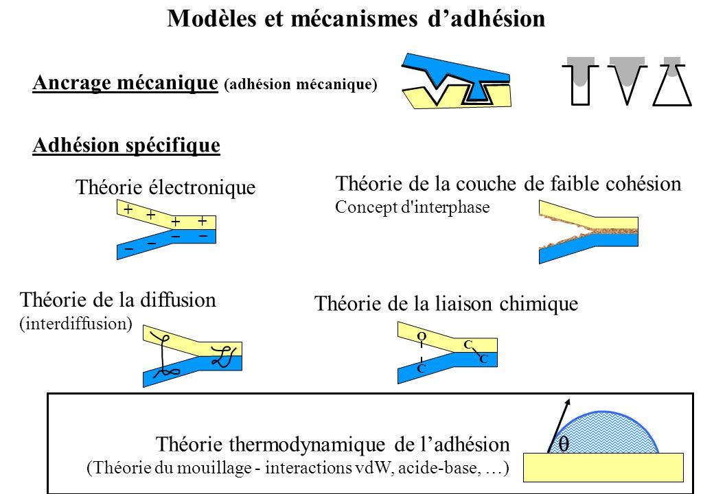 Modèles et mécanismes d'adhésion