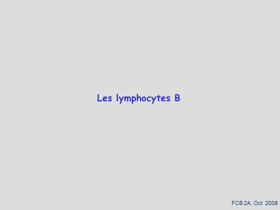 Les lymphocytes B FCB 2A, Oct 2008