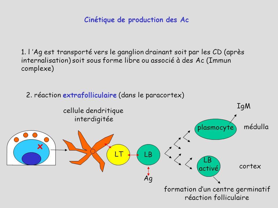 x Cinétique de production des Ac