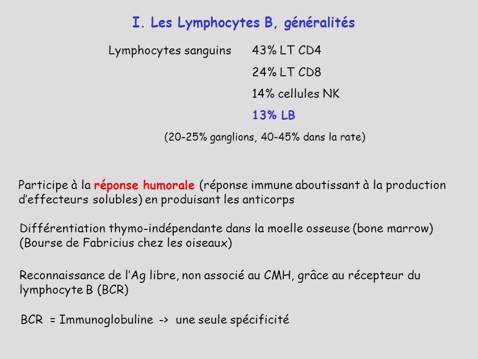 I. Les Lymphocytes B, généralités