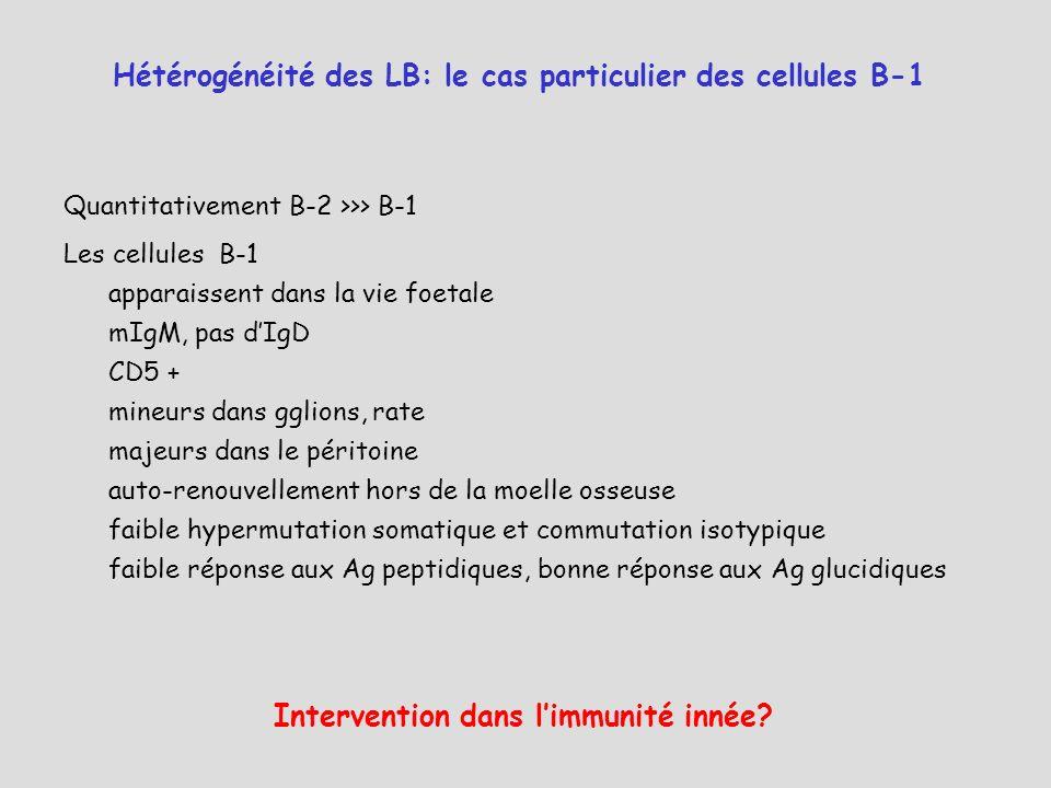 Hétérogénéité des LB: le cas particulier des cellules B-1