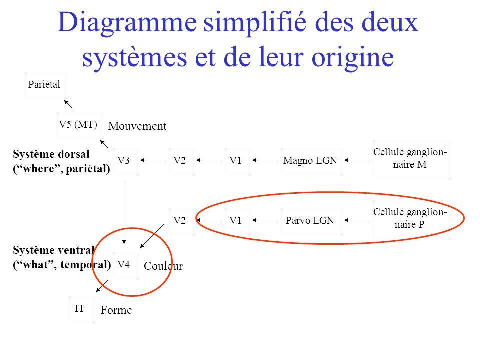 Diagramme simplifié des deux systèmes et de leur origine