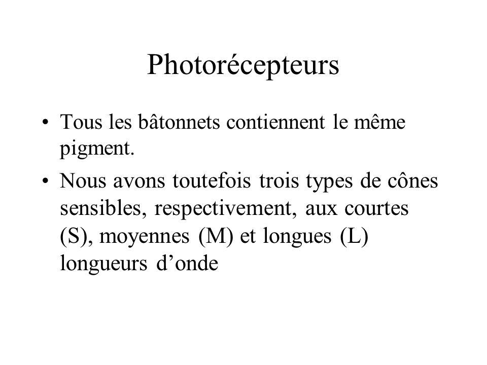 Photorécepteurs Tous les bâtonnets contiennent le même pigment.