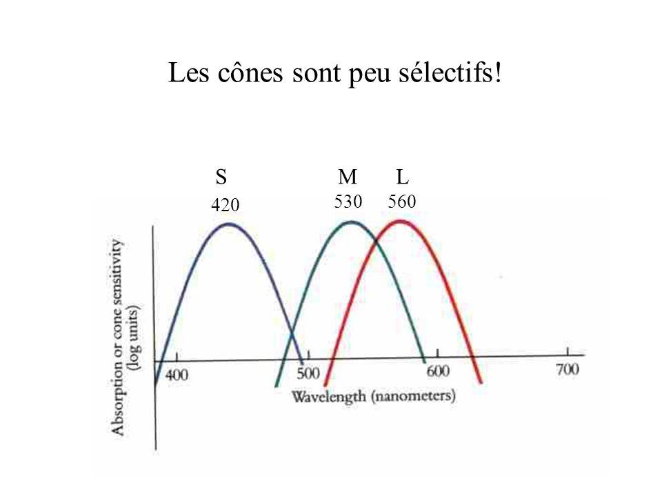 Les cônes sont peu sélectifs!