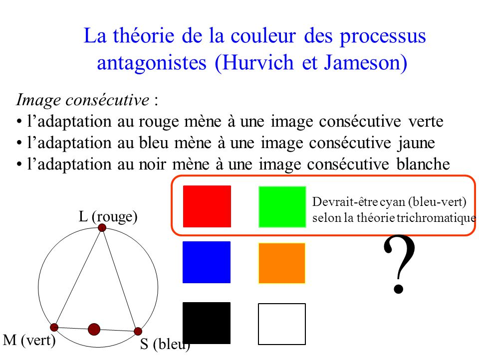 La théorie de la couleur des processus antagonistes (Hurvich et Jameson)