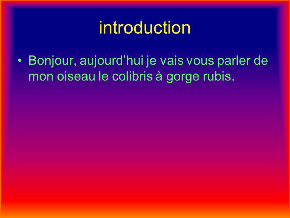 introduction Bonjour, aujourd'hui je vais vous parler de mon oiseau le colibris à gorge rubis.