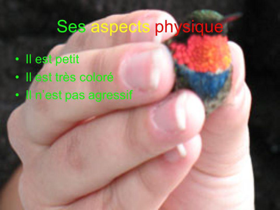 Ses aspects physique Il est petit Il est très coloré