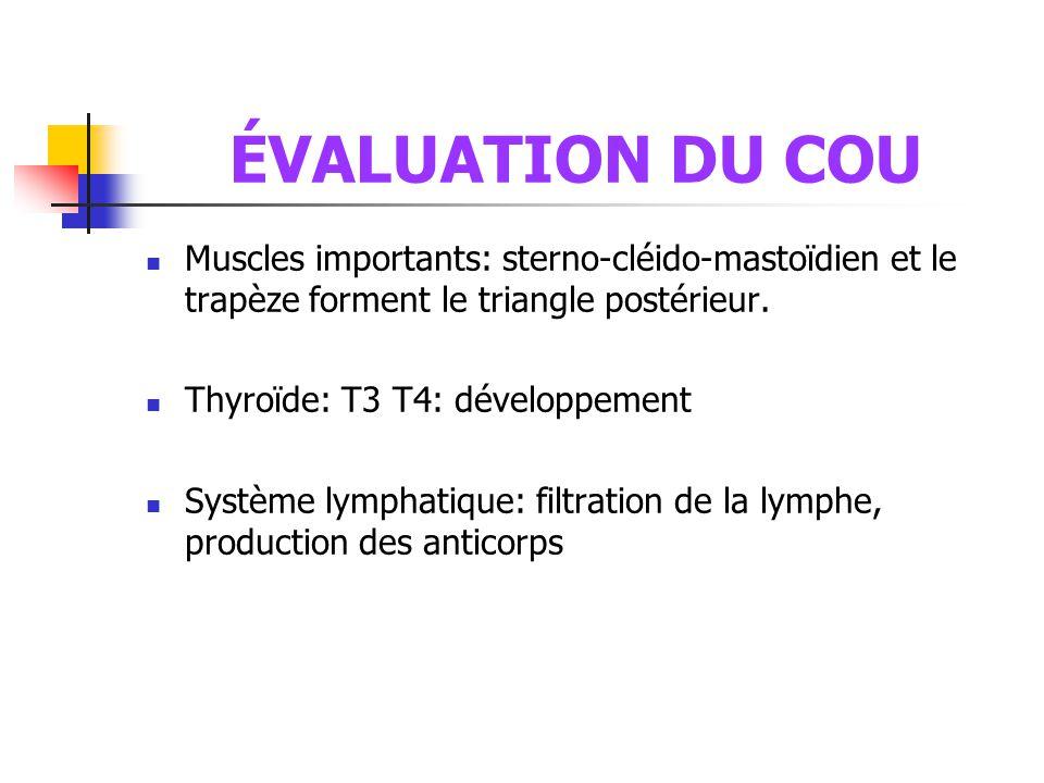 ÉVALUATION DU COU Muscles importants: sterno-cléido-mastoïdien et le trapèze forment le triangle postérieur.