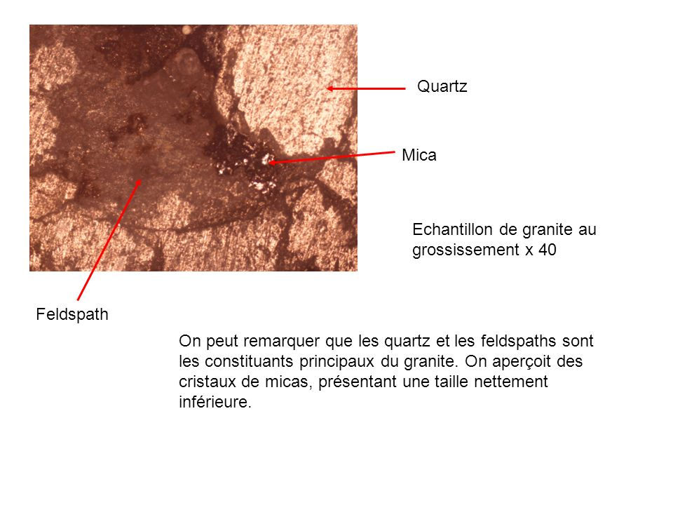 Quartz Mica. Echantillon de granite au grossissement x 40. Feldspath.