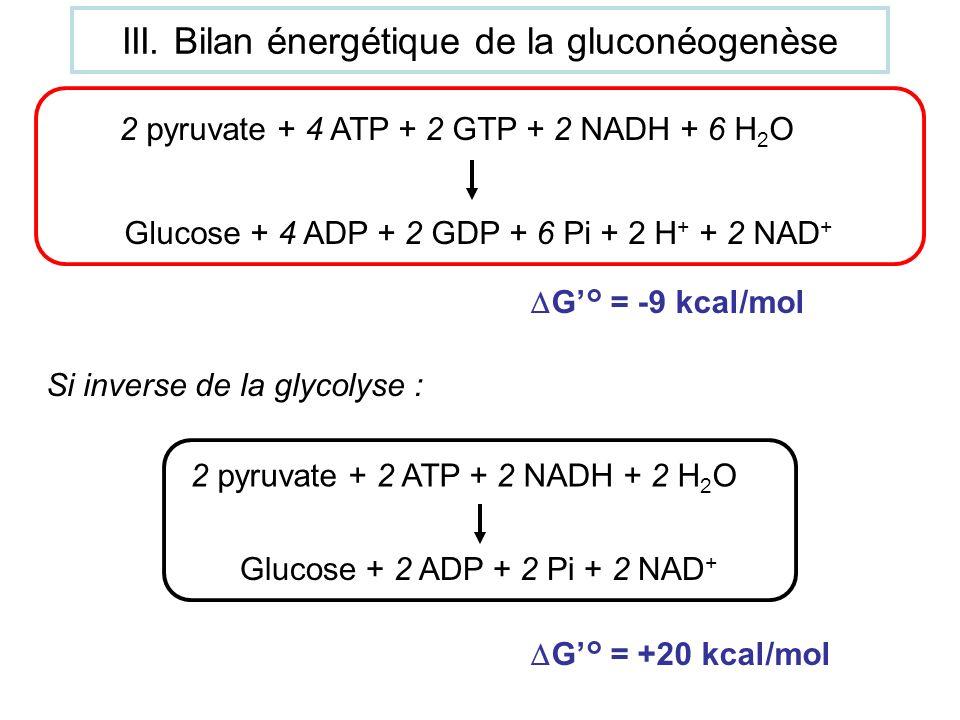 III. Bilan énergétique de la gluconéogenèse